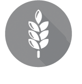 seedandgrains